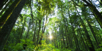 Sustainable-Old-Growth-Forest